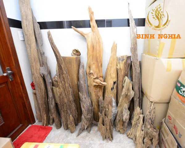 Difficult journey to find agarwood in forest
